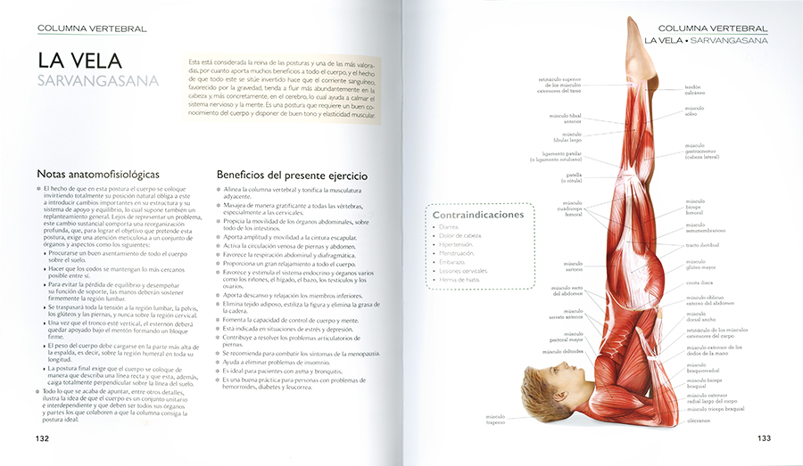 Atlas ilustrado yoga. Anatomía, posturas, de Jordi Vigué, Asklepios ...