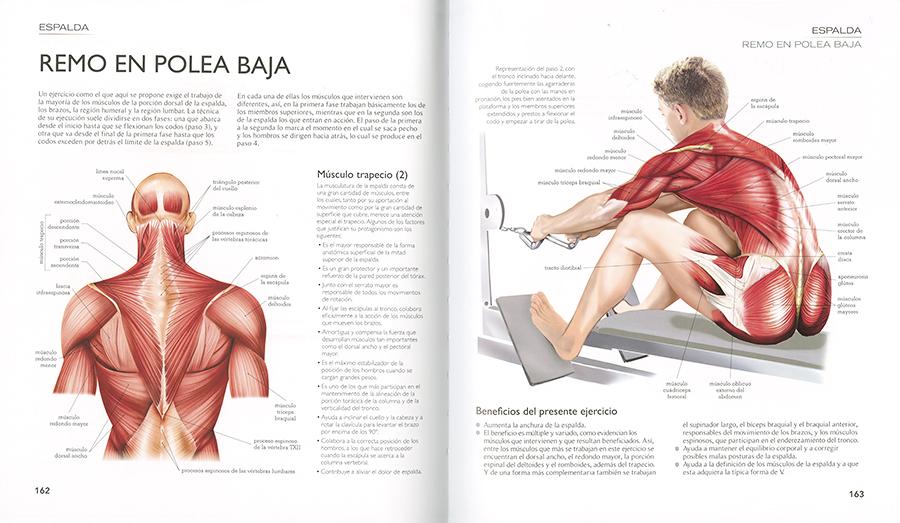 Atlas ilustrado fitness, anatomía, ejercicios, de Jordi Vigué ...